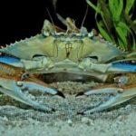 دانلود پاورپوینت خرچنگ ها