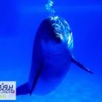 دانلود پاورپوینت زندگی دلفین ها