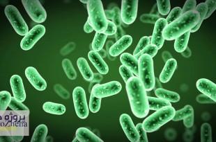 تاثیر پروتئین های هیدرولیز شده ضایعات کشتارگاهی طیور بر سطح باکتری های روده و بقا در لارو قزل آلا در مواجهه با آئروموناس سالمونیسیدا