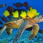 دانلود پاورپوینت لاک پشت های دریایی
