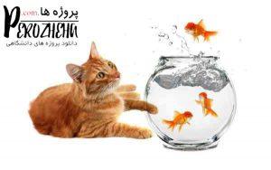 استرس در ماهی