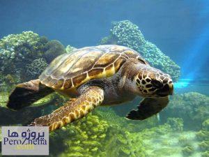 بررسی رفتارمهاجرت در لاک پشت های دریایی