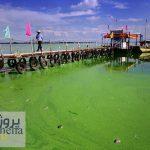 دانلود پاورپوینت تاثیر جلبک در دریا
