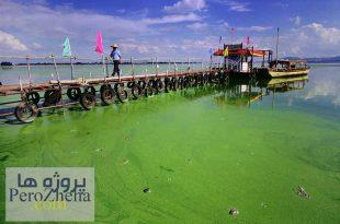 پاورپوینت تاثیر جلبک در دریا