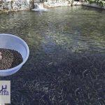 دانلود پاورپوینت تغذیه تکمیلی آبزیان پرورشی