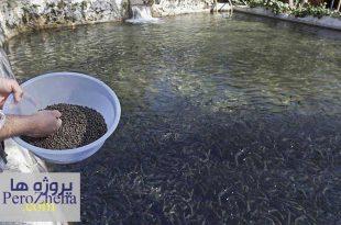 پاورپوینت تغذیه تکمیلی آبزیان پرورشی